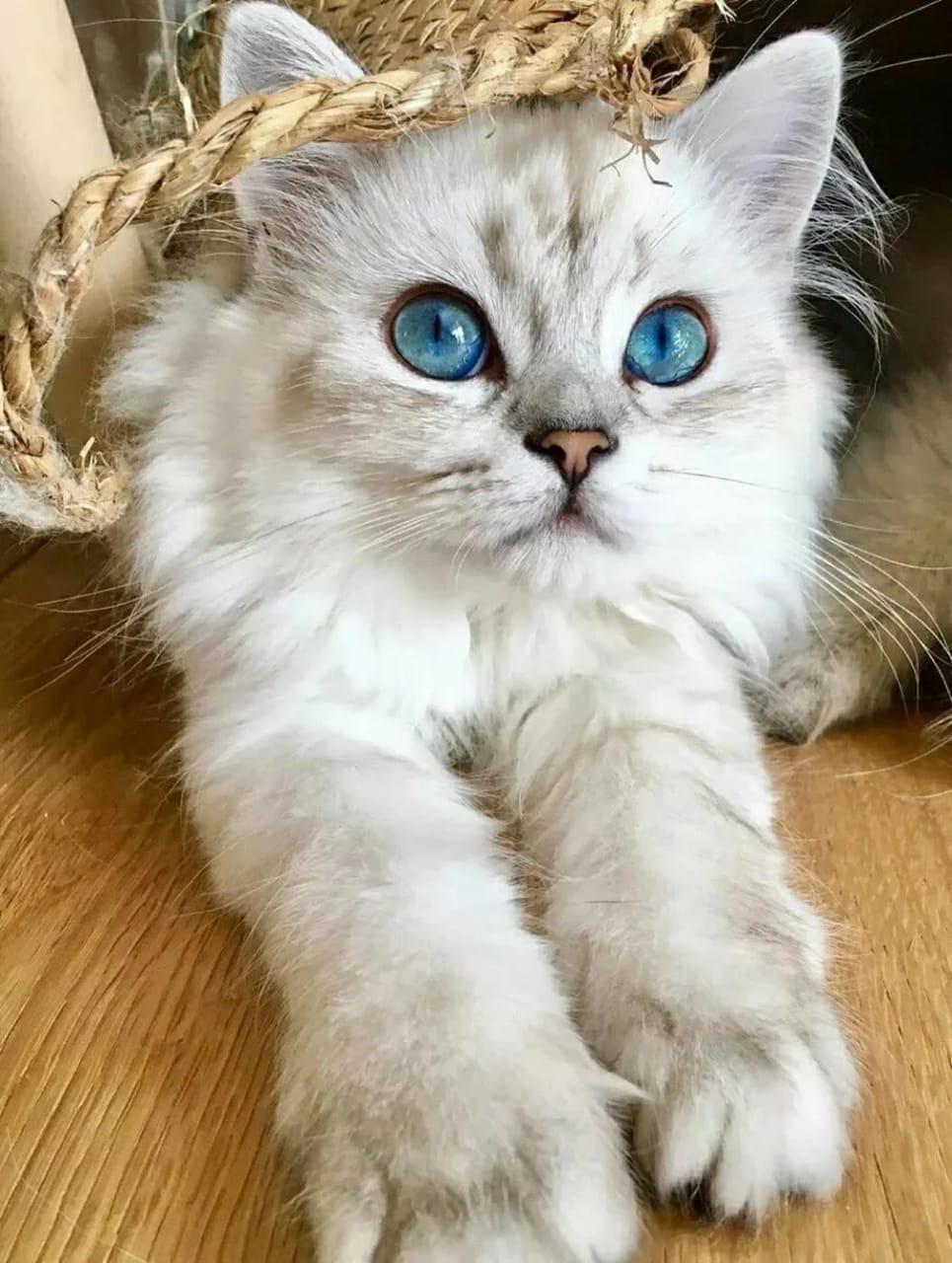 10 интересных фактов о кошках.